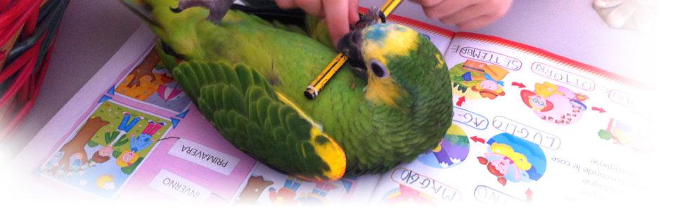 Amazzone - Allevamento pappagalli domestici, 3405828767 ilgiardinoincantato.it Bologna